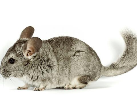 属鼠的人最怕和什么属相结婚?是不是你?老人讲的话真的很准