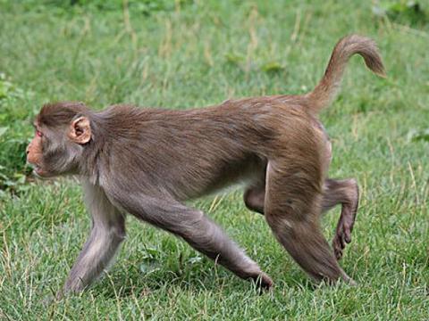 88岁高僧说了:生肖猴9月底要大难临头,能躲过就是福!