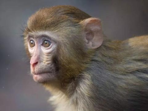 """再过7天,生肖猴记得留条""""后路""""给自己,家里有属猴的速看!"""