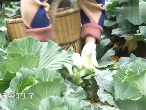 筷子兄弟一来就干活,饿的肖央吃生菜,张子枫都惊呆了