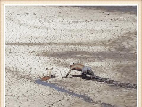 男子钓鱼发现沼泽地内求救声, 细看后内心崩溃果断救援