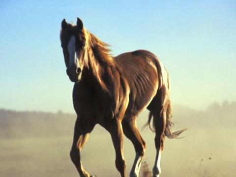 十马九不全:揭秘66年生肖马的毕生寿命,过了54岁后什么命?