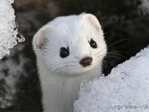 世界上十大长相可爱又不常见的动物们