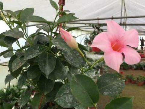 秋天养花就盆栽这4款,打理简单!花期长、花量大,植株还耐寒