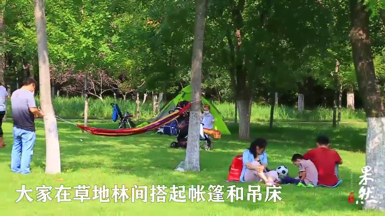 果然视频|尽享初秋的金色时光,可到济南植物园草地读书、扎帐篷