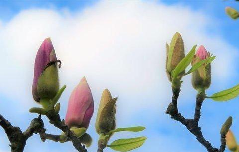 碰触心灵的感悟短语,句句阳光,越看越入迷