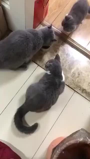 猫妈妈:孩子先吃,你吃什么吃!