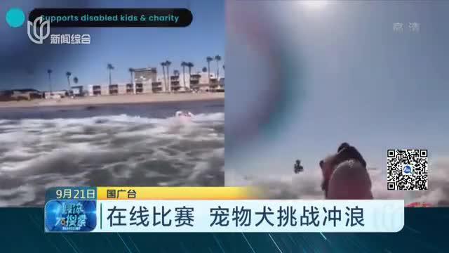在线比赛  宠物犬挑战冲浪