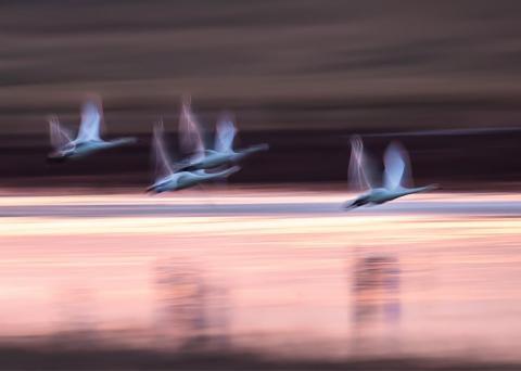 《候鸟的心愿》在泰湖国家湿地公园等地取景