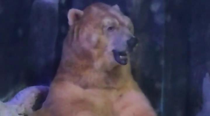 海洋动物园里拍到的北极熊……