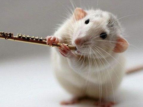 2020年属鼠人整体运势