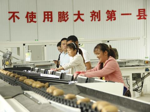 生态茶乡遍布金蛋蛋,西乡县第二届猕猴桃采摘节开幕