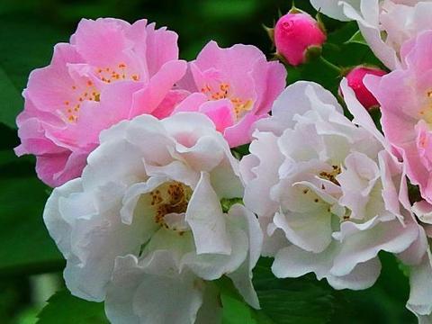 9月30号开始,4属相桃花朵朵开,事业一帆风顺,双喜临门