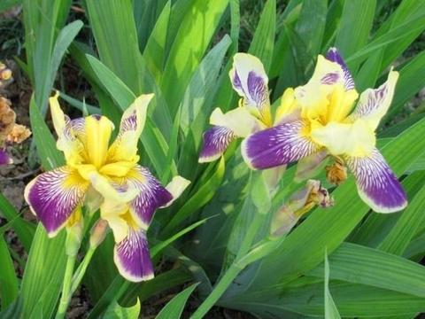 4种花好养又漂亮,花朵大花期长,比绿萝更好养,比玫瑰更漂亮