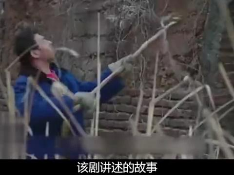 《大江大河》正式开播,王凯携手小包总杨烁,开启农民工逆袭史!