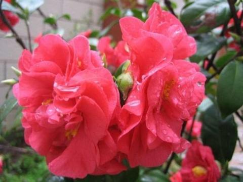 最有仙气的4种花,迷人的花朵,花色艳丽,一年花期200天