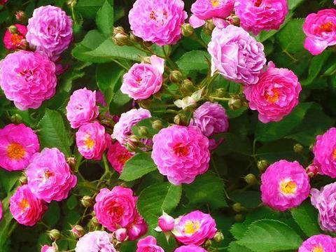 9月27号开始,4属相接好运,桃花朵朵开,家中财运旺,双喜临门