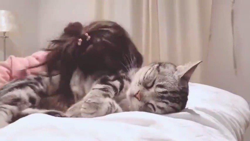 猫咪是不是只会对小朋友没脾气啊……