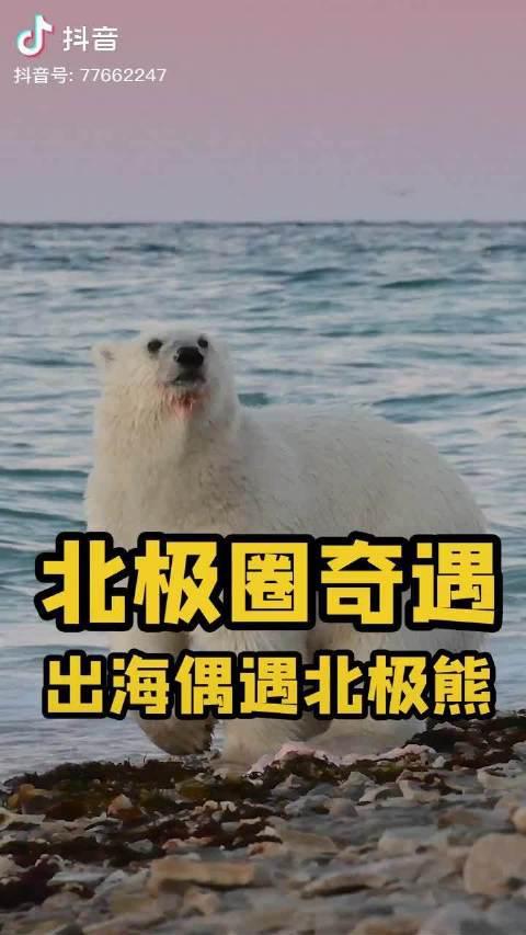 出海偶遇北极熊
