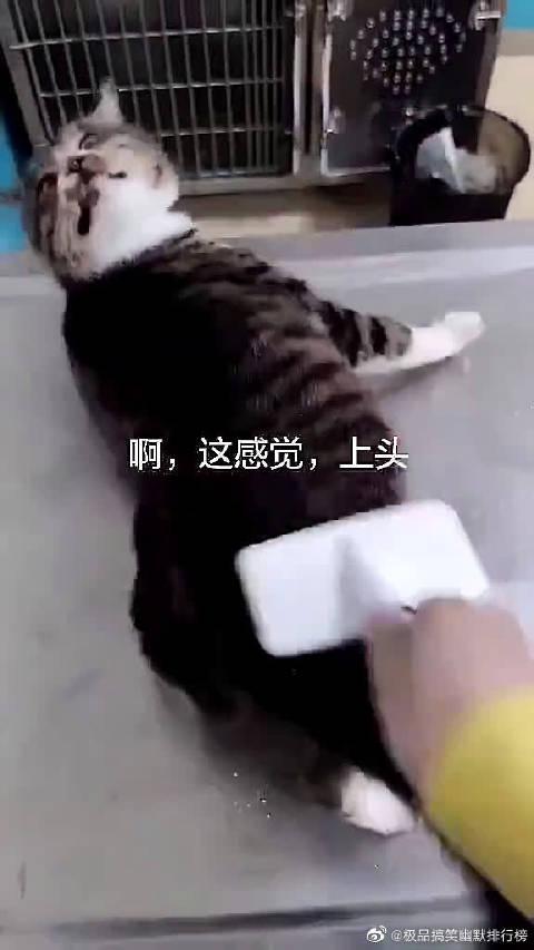 """猫:""""差点一个劲头缓不过来了!"""""""