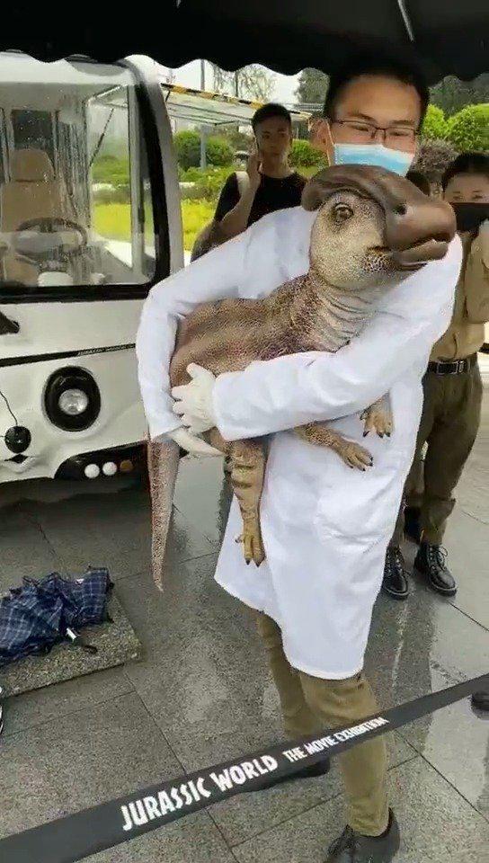 这是什么动物?
