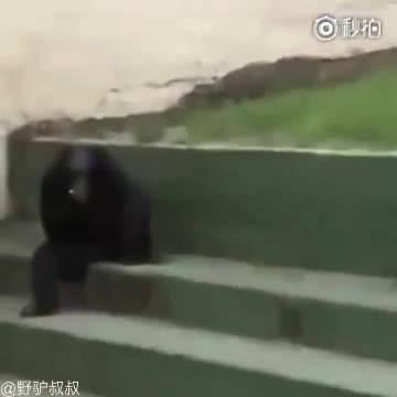 看这拿烟的姿势就可以判定这是个有故事的猩猩!