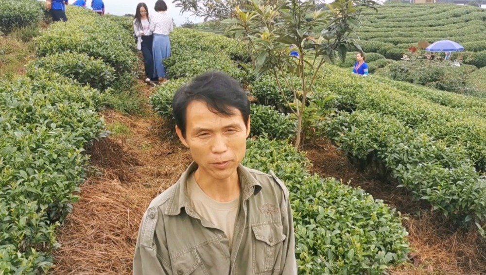 广西三江侗族自治县八江镇布央村的仙人山茶场常年云雾缭绕……