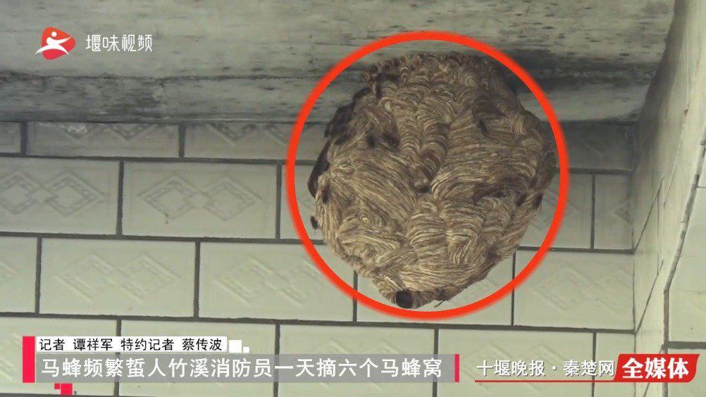 马蜂频繁蜇人 竹溪消防1天摘6个马蜂窝