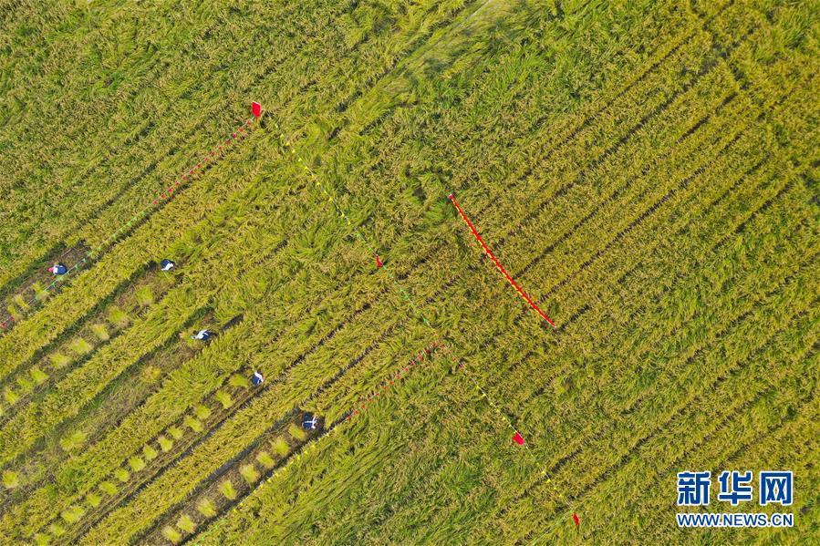 内蒙古扎赉特旗举办农民丰收节活动 扎赉特旗农