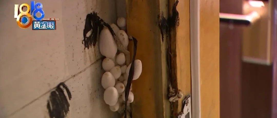 资金紧张想卖房,却被一群蘑菇给黄了……