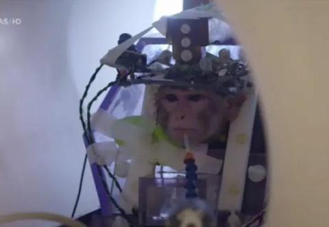 """比利时实验室在猴子头骨钻洞做脑功能研究,称""""会使千万人受益"""""""