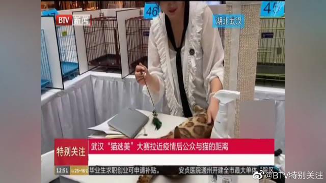 """武汉""""猫选美""""大赛拉近疫情后公众与猫的距离"""