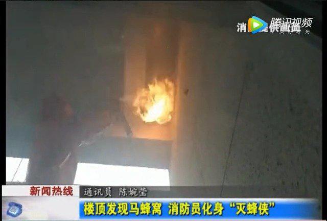 蚌埠 工人楼顶发现马蜂窝 消防全副武装帮摘除