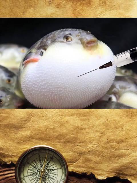 河豚鼓成气球的时候,用针扎一下会炸吗?🤓