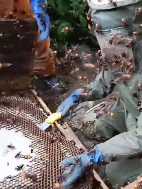 为了蜂蛹取蜂巢,这个看着可怕,好在有防护,否则直接变成亡者