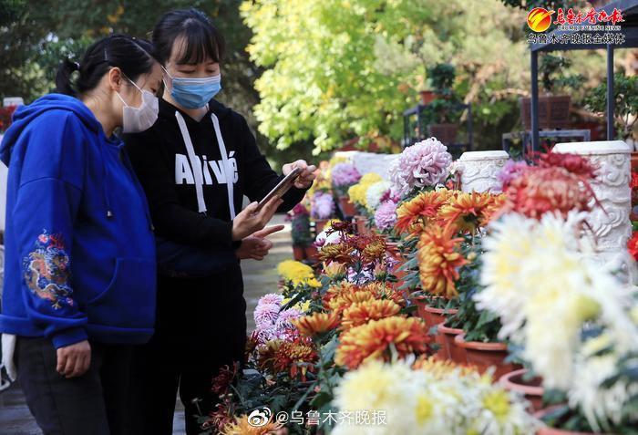 红山公园菊花展开展