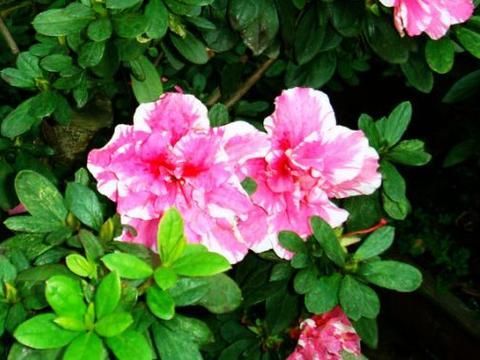 10月,运势上上吉,4属相吉星当头,桃花朵朵开,多福多寿