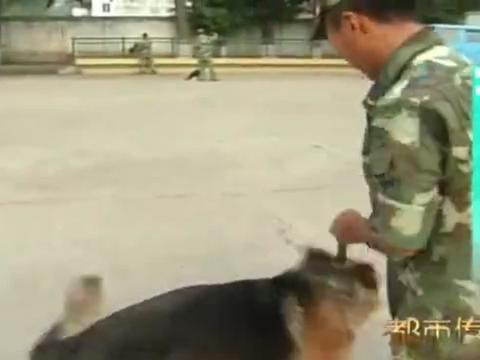 新兵训导员溺爱警犬,遭班长大声呵斥:你当这是宠物犬吗
