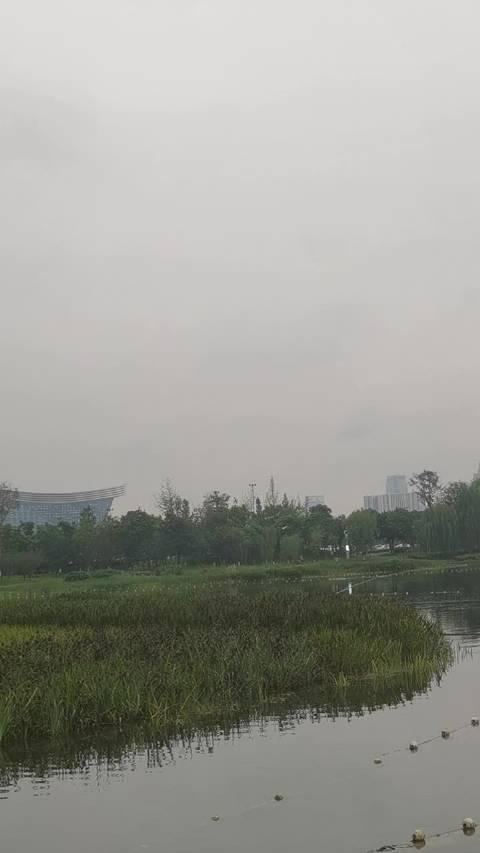 锦城湖白鹭高飞,有人划船,充满诗情画意,让人流连忘返