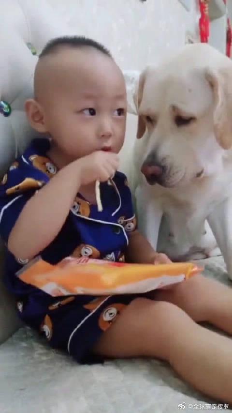 狗狗看着小主人吃零食,自己很想吃又不敢抢,真是太可怜了!