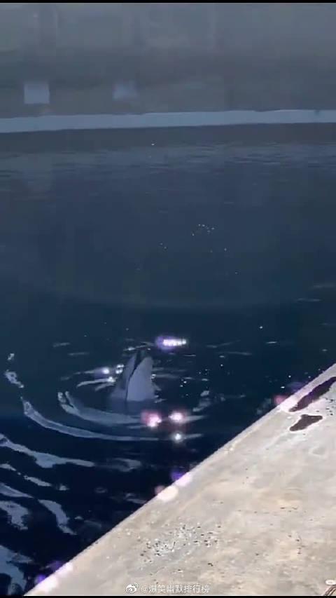 海豚:有鱼吃就是这么豪横