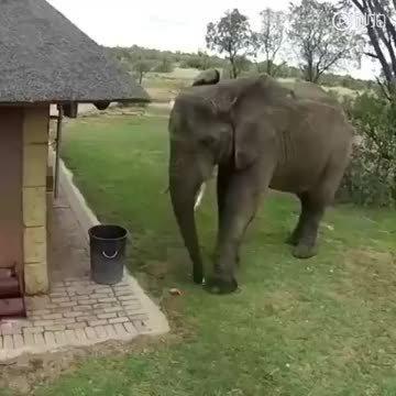 野生动物保护区的一只大象,将垃圾捡起来扔进了垃圾箱……