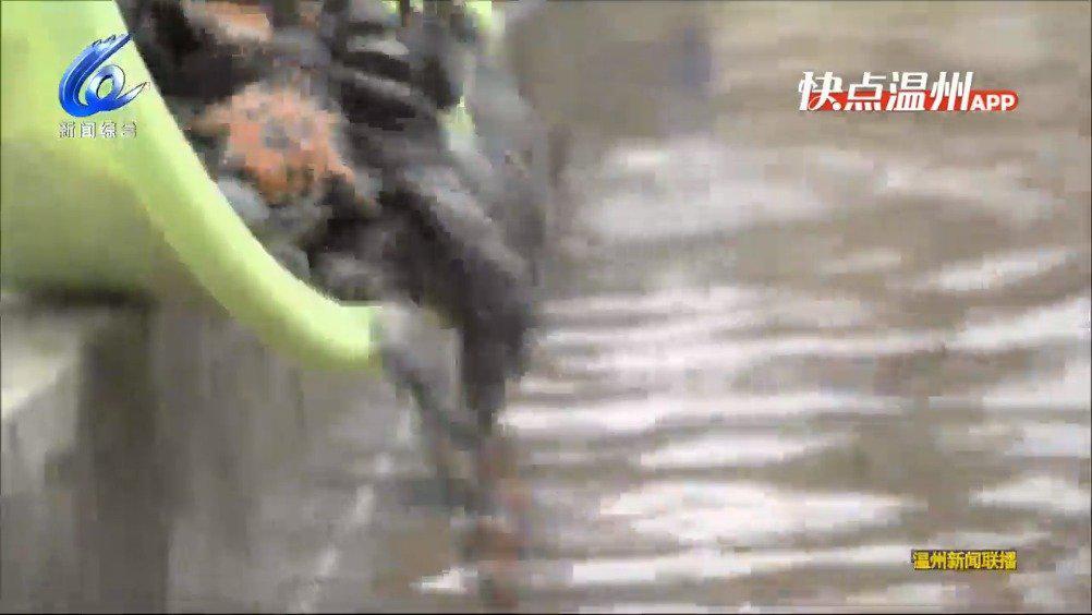 温州永嘉:楠溪江等四大水域增殖放流