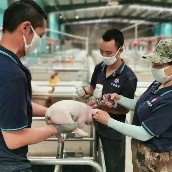 外行又来跨界养猪!面条商陈克明进军养猪业,预计年出栏达10万头