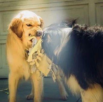 """激动!中国科学家找到抑制狂犬病毒关键""""开关"""""""