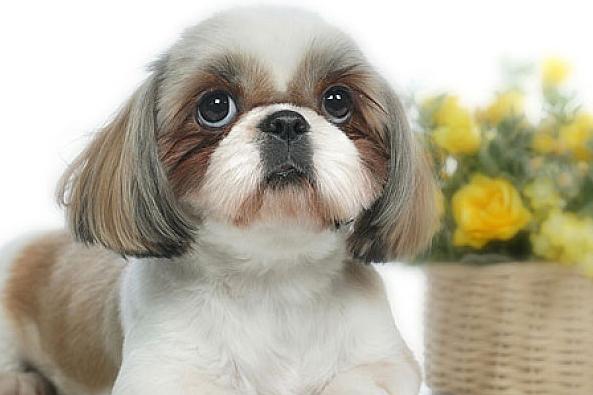 生肖狗:10月初将是你人生的分水岭!家有属狗的好好看看