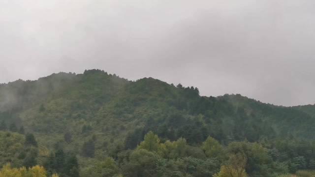 照金镇子旁边一座普通的小山头,说这里是朱鹮的分布地,我信