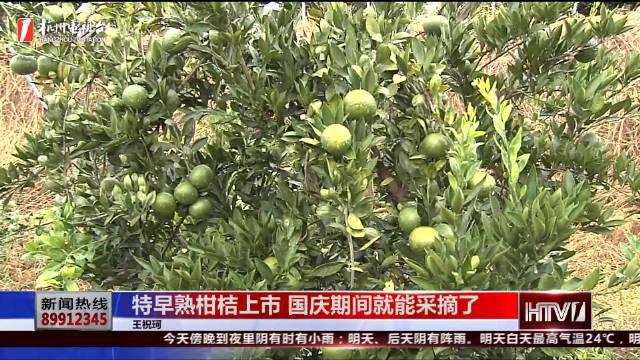 杭州特早熟柑桔上市 国庆期间就能采摘了