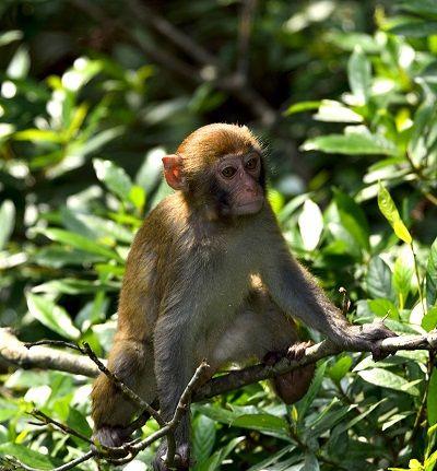 大蟒蛇爬树欲吃小猴子,猴妈妈机智喊叫引来村民救援