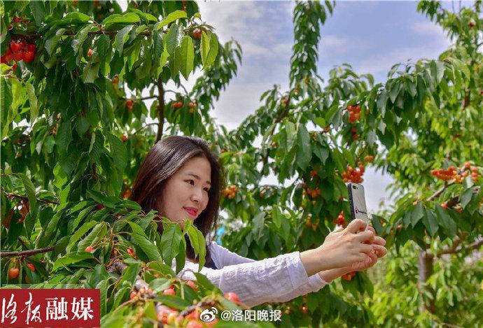 中国樱桃高质量发展论坛在新安县举办